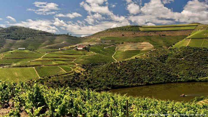 Alto Duero, el norte de Portugal, es la región vinícola más antigua del mundo