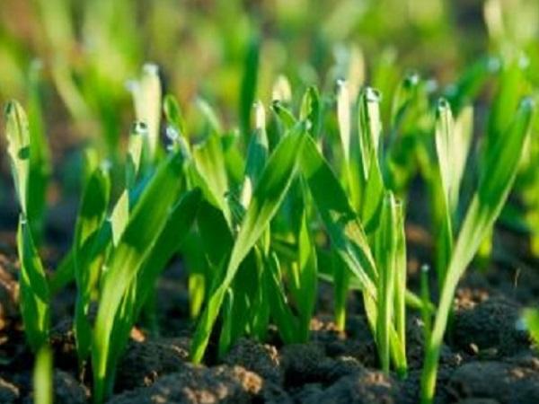 MGAP convoca a productores para sistematizar rendimientos de cultivos de secano y mejorar seguros agrícolas