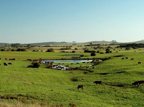 Crece la faena anual de vacunos y ovinos, y las exportaciones cárnicas