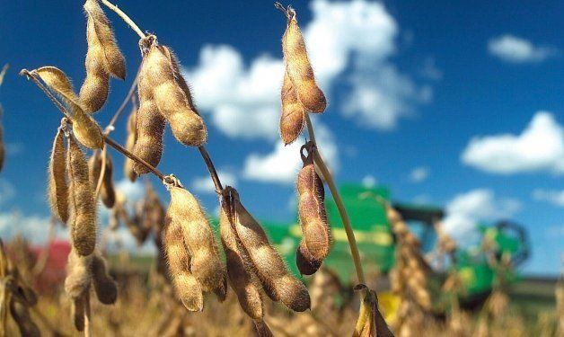 CMPP: La soja de exportación incrementó su cotización