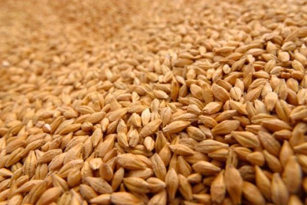 El trigo llegó a los màximos desde mayo