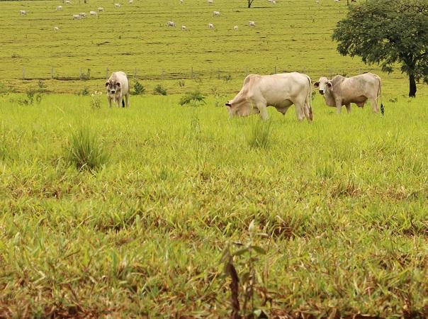Brasil registró dos casos de vaca loca atípico
