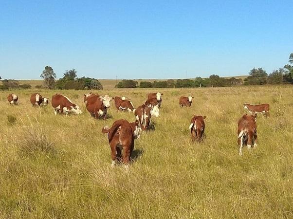En Uruguay la salud del ganado debe estar en agenda, siempre