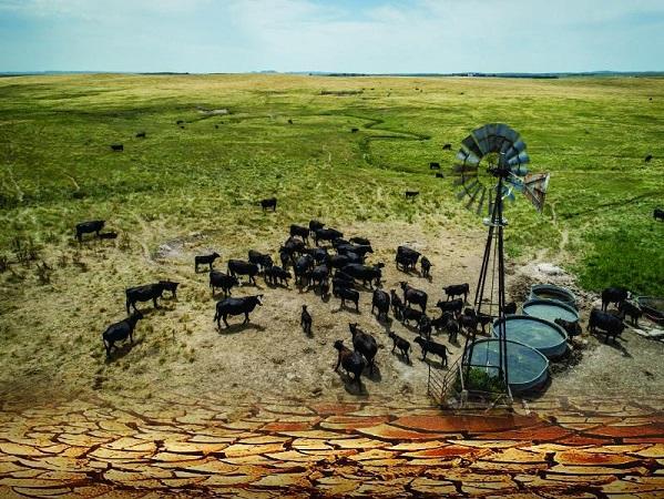 Los impactos de la sequía en la carne de vacuno y más allá