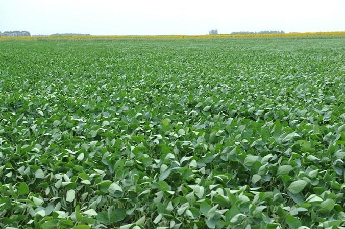 Paraguay exportó soja por US$ 3.174 millones, 861 millones más hasta agosto