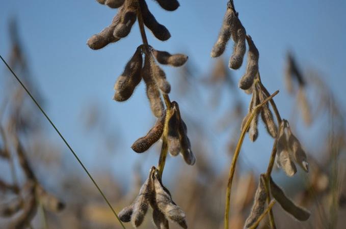 Caída de la soja en precios que publicó la CMPP