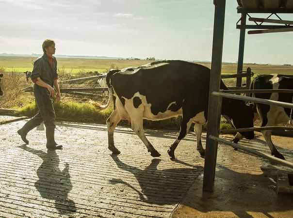 En julio la remisión de leche creció 6%