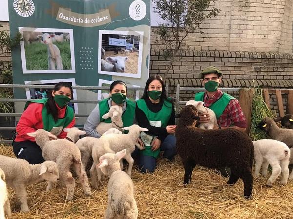 Jóvenes estudiantes de UDE colaboraron con el SUL la guardería de corderos