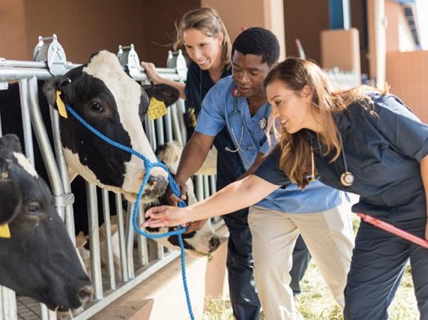 """OPS acuerda aplicar """"Una salud"""" para abordar amenazas sanitarias de personas, animales y medio ambiente"""