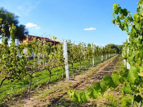 El cambio climático incendia viñedos y afecta terroirs en Europa, EE.UU. y Australia